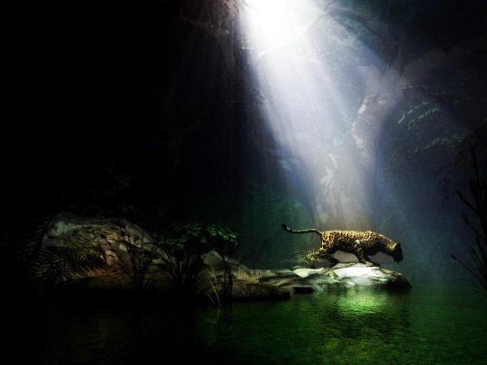 jungle-cat-light-tiger