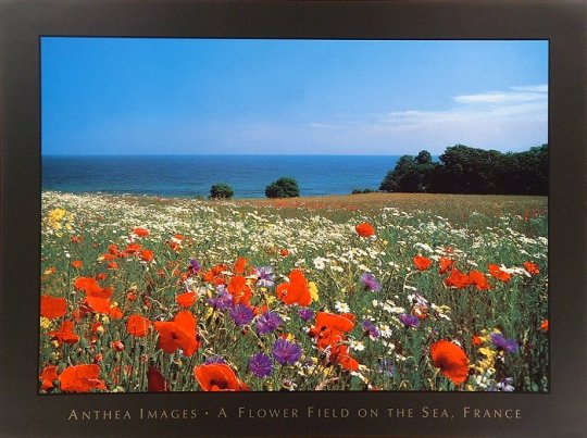 A_flower_field_on_the_sea_France